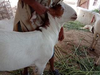 Rajanpuri-Jori